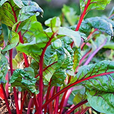 Swiss Chard Rainbow (Per Bunch)