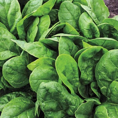 Spinach (100 Gms)
